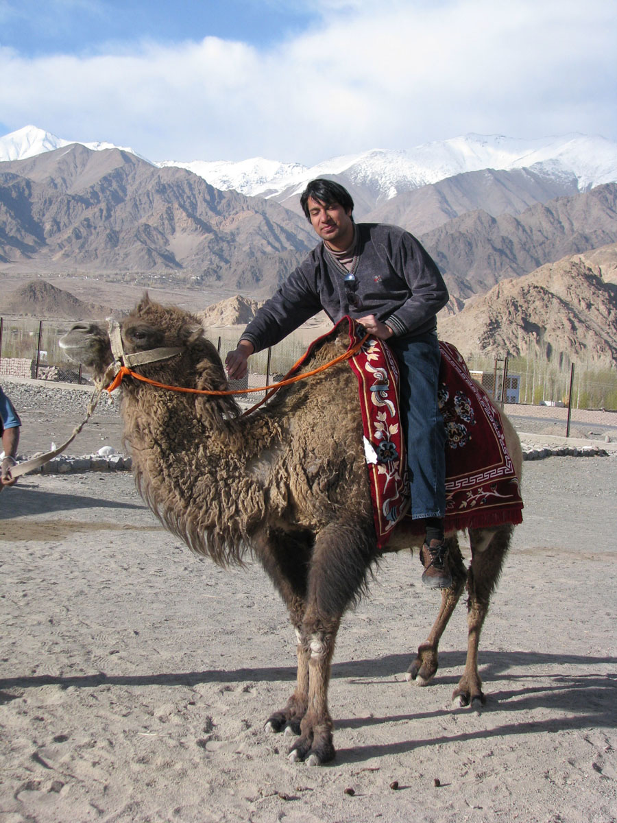 Travel India.Leh.Riding a Double Humped Camel