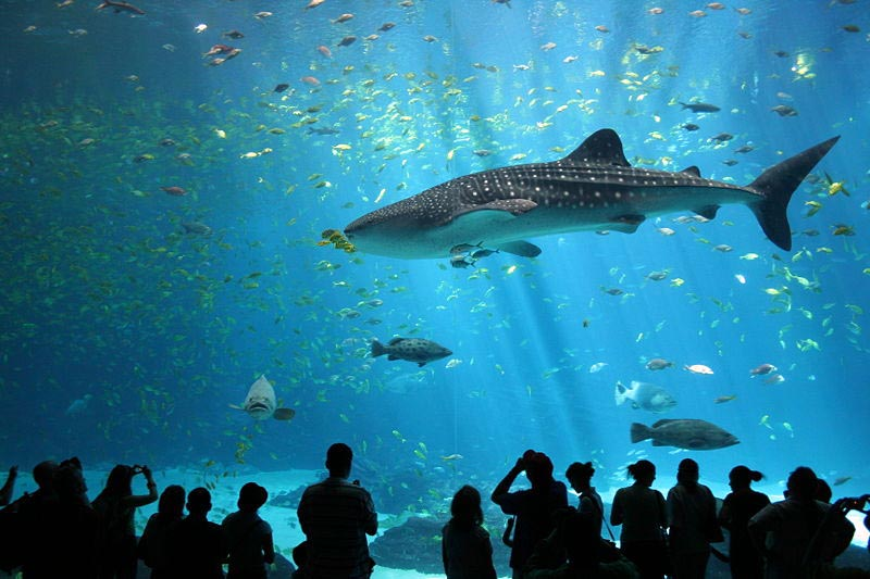 Travel India Whale Shark Georgia Aquarium, Atlanta, U.S.